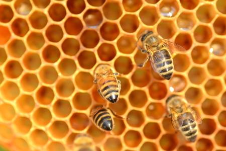 양봉장에서 벌집 열심히 일하는 꿀벌