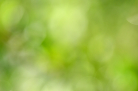 abstract natural green background with bokeh effect Stock Photo