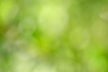 textura: abstracto fondo verde natural con efecto bokeh