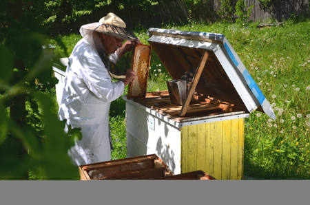 Experienced senior apiarist working in apiary in the springtime Stock Photo