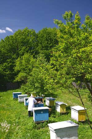 apiarist: Experienced senior apiarist working in apiary in the springtime Stock Photo