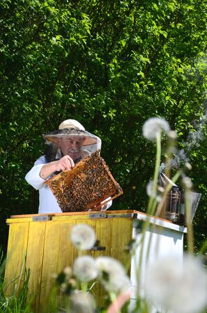 apiary: Experienced senior inspection in making apiarist apiary in the springtime Stock Photo