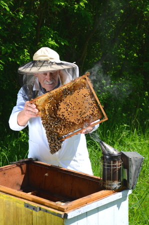 apiarist: Experienced senior inspection in making apiarist apiary in the springtime Stock Photo