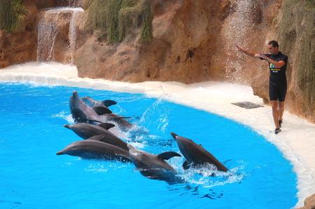 perform: Dolphin show in Loro Parque in Puerto de la Cruz on Tenerife Editorial