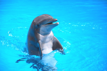 Smiling dolphin in the Loro Parque in Puerto de la Cruz on Tenerife, Canary Islands, Spain