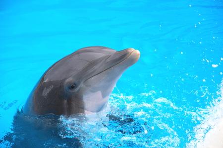 dauphin: Sourire de dauphin dans le Loro Parque � Puerto de la Cruz de T�n�rife, �les Canaries, Espagne