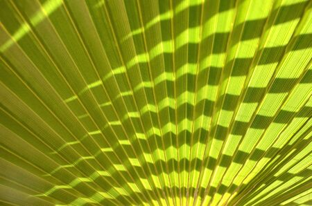clean artery: Closeup of palm leaf for background trea Stock Photo