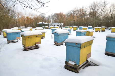hibernate: Beehives in apiary covered with snow in wintertime