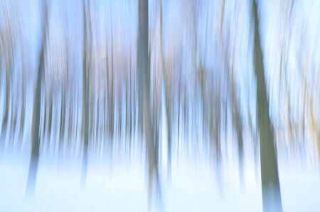 wintertime: abstract forest in wintertime