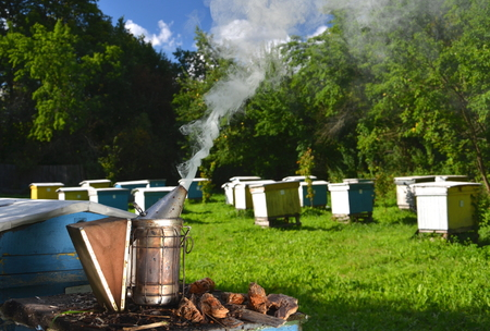 smoker: bee smoker in apiary Stock Photo