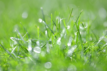 closeup of dewed grass with bokeh
