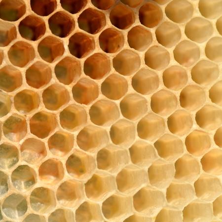 natuurlijke honingraat Stockfoto