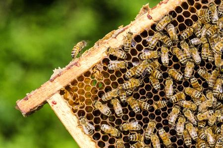 꿀벌 여름철에 양봉장에 벌집에 스톡 콘텐츠