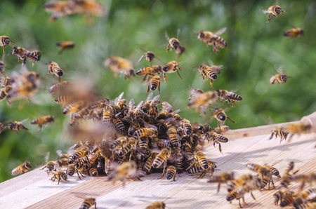 swarm of bees around a dipper soaked in honey in apiary Stock Photo