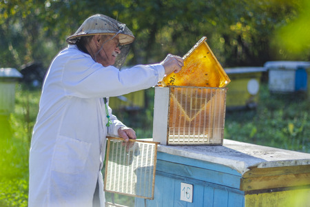 senior apiarist making inspection in apiary in the summertime Banque d'images - 123953546