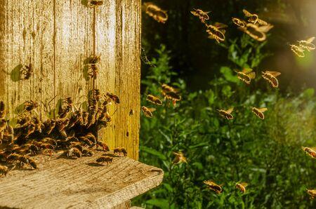 honey bees entering their beehive in summertime