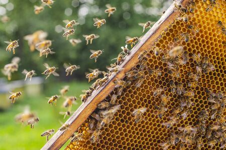 honey bees entering their beehive in summertime