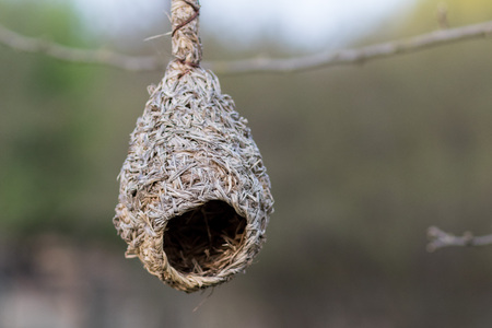 Hanging bird nest Stock Photo