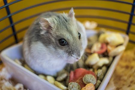 Hamster in seinem Käfig, der in der Schüssel mit Futter sitzt