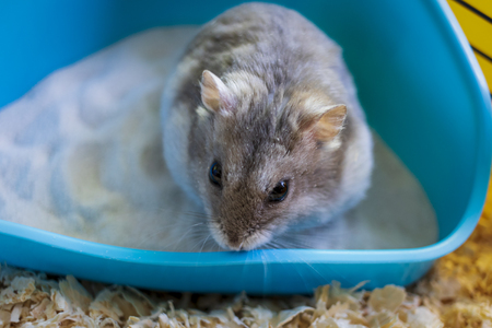 Hamster inside his cage sitting in his sandbox