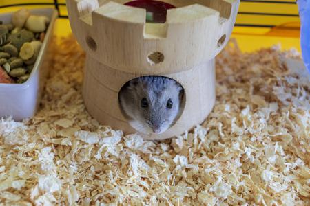 Hamster à l'intérieur de sa cage se cachant dans sa maison de château