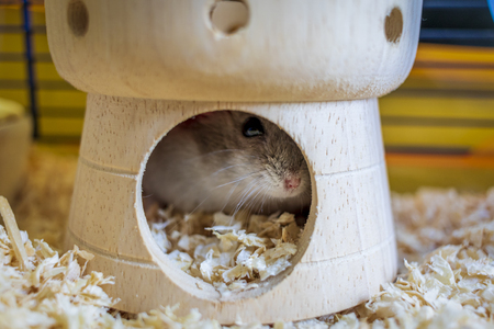 Hamster inside his cage hiding in his castle house