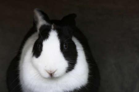Easter Bunny Stock Photo - 1684553