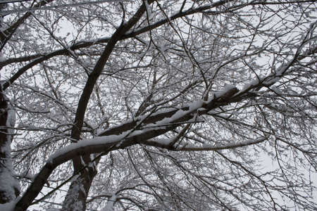 Snow covered tree Stock Photo - 2761724