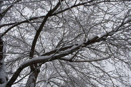 Snow covered tree Stock Photo - 2761724