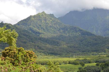 Ppiges fruchtbares Tal umgeben von Bergen in Kuhio, Kauai. Standard-Bild - 80310088
