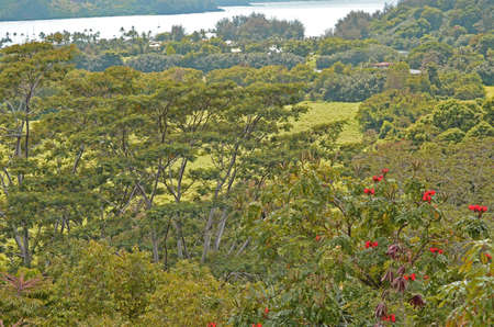 Lush Greenery off Kuhio Highway near Princeville Stok Fotoğraf