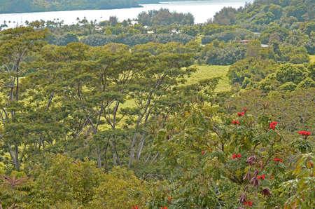 Lush Greenery vor Kuhio Highway in der Nähe von Princeville Standard-Bild - 80702580