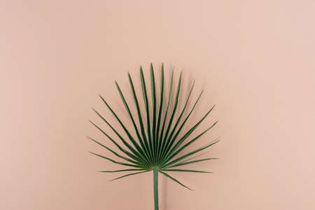 Palm leaf on color background