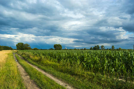 Road to the corn field and cloudy sky