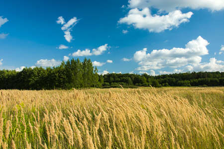 High wild grasses on the meadow and blue sky with clouds Stock Photo