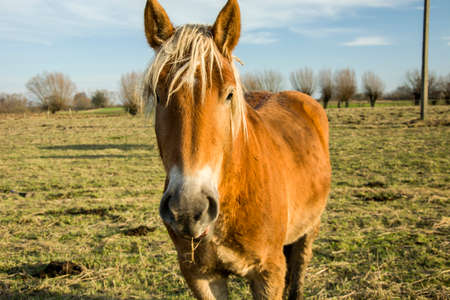 Brown horse with a bright blonde mane