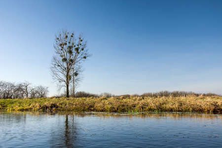 Tall tree without leaves and riverside Stock Photo