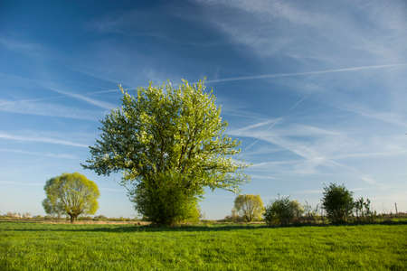 Flowering tree on green meadow and blue sky