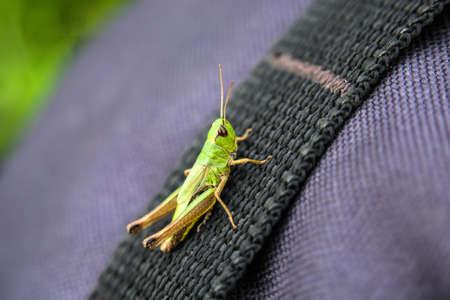 A grasshopper sitting on a bag