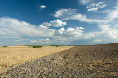 A field of grains. Plowed field, horizon and clouds in the sky Stock Photo