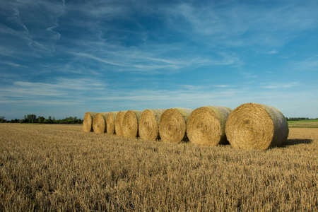 Hay bales arranged in a row on the field and blue sky Stock fotó