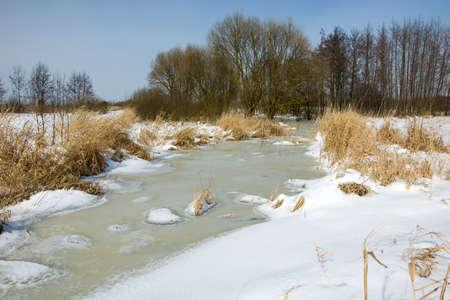 Frozen wetlands, trees and blue sky Фото со стока