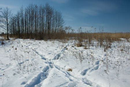 Traces of animals on snow, trees and blue sky