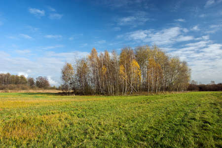 Big green meadow, coppice and white clouds on blue sky - autumn view Stock fotó