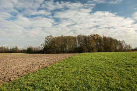 Plowed field and green meadow, copse and white clouds on blue sky Stok Fotoğraf
