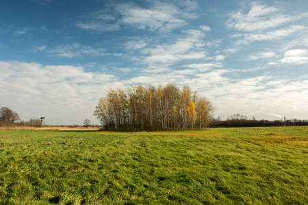 Big green meadow, copse and white clouds on blue sky - autumn view Stock fotó