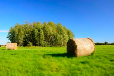 Coils of hay on a green meadow, copse and cloudless blue sky - blur and contrasting colors Stock Photo