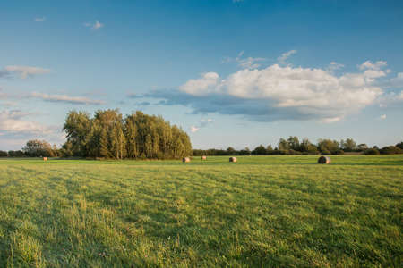 Big green meadow, copse and cloud in the blue sky Stock fotó