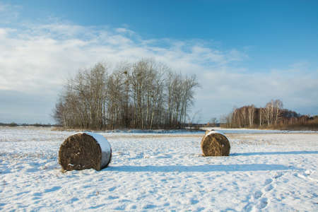 Two hay bales lying on a snowy field, a copse and a cloud on a blue sky Reklamní fotografie