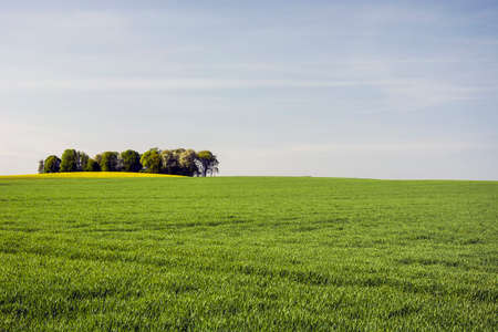 large green field and coppice Stock fotó
